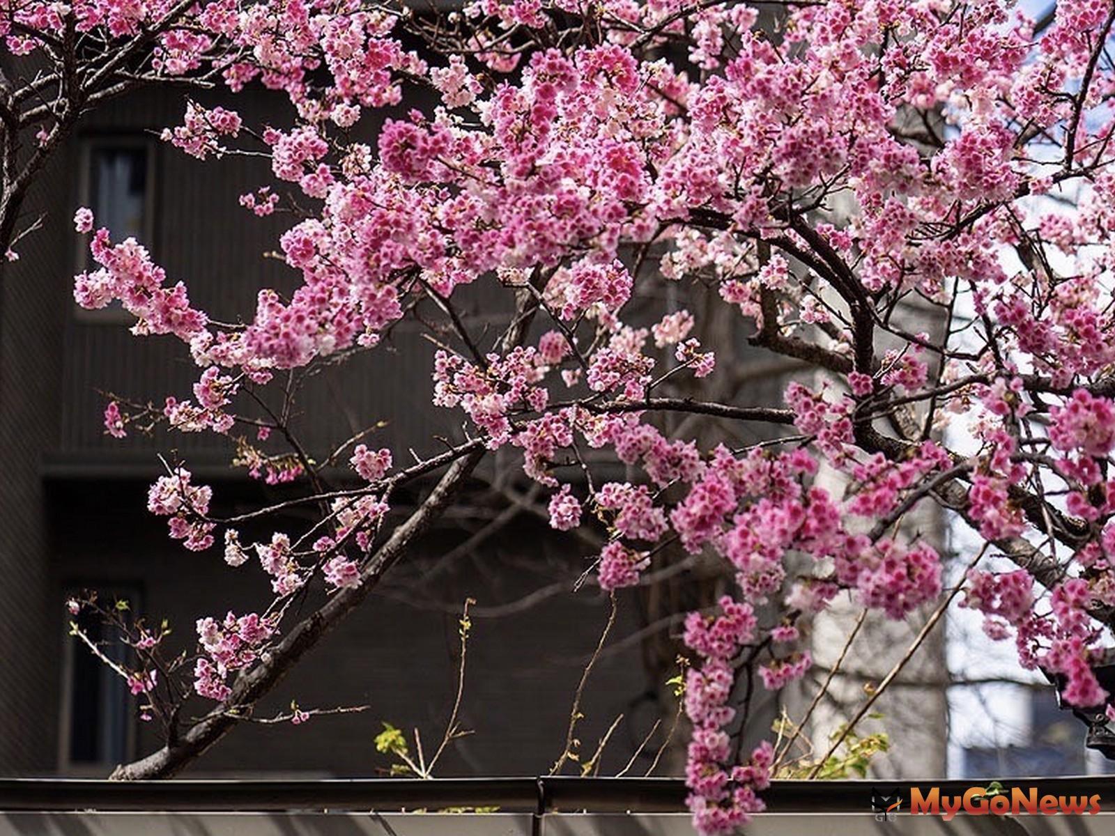 「璞園袖里春」附近街道的寧靜氛圍,讓真下宗治想到日本的巷弄。(圖/業者提供) MyGoNews房地產新聞 熱銷推案